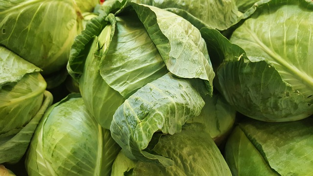 cabbage-1353192_640